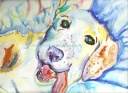 Nanook - watercolor