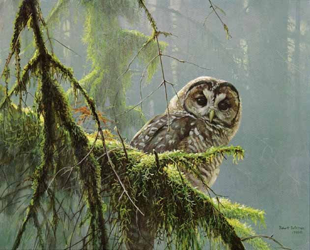 Spotted Owl - painting