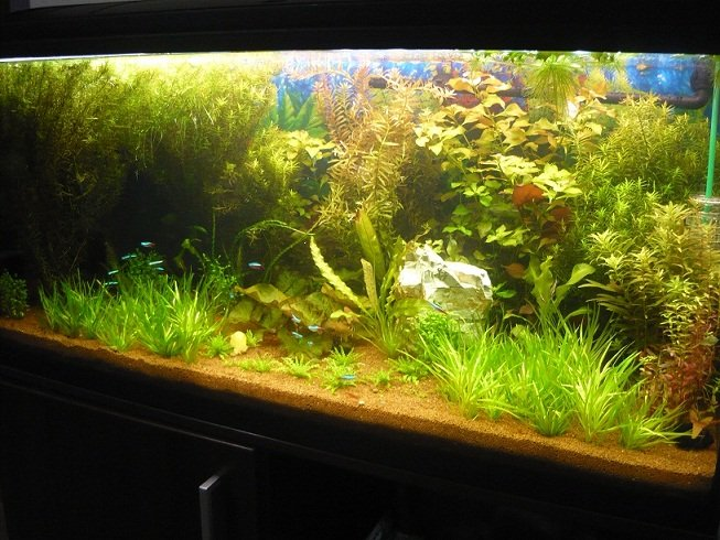 Aquascape maintenance 28 images fresh low maintenance for Low maintenance fish tank