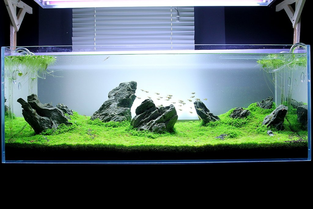 How Create An Iwagumi Aquascape Aquarium Life Cyprus