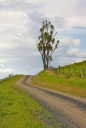 - Country Road  - Ross McIvor