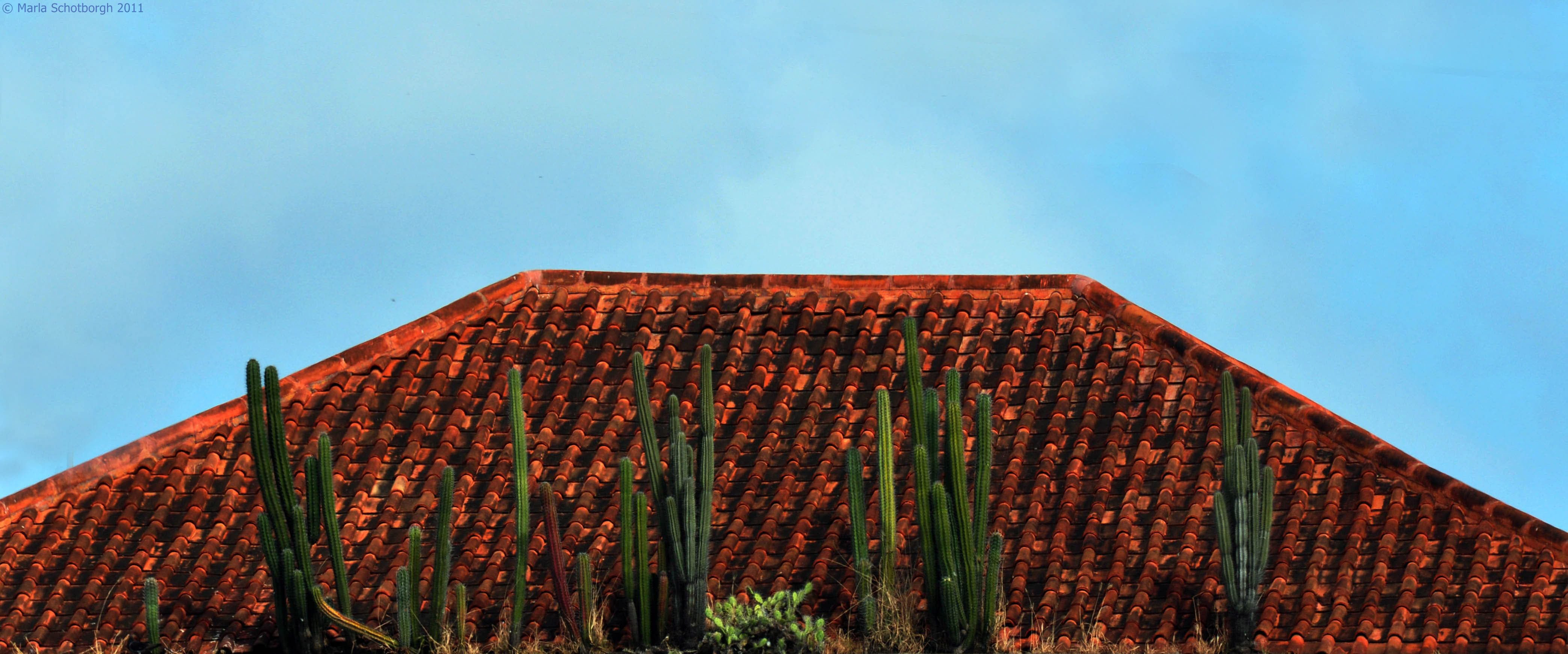 Cactus on Roof