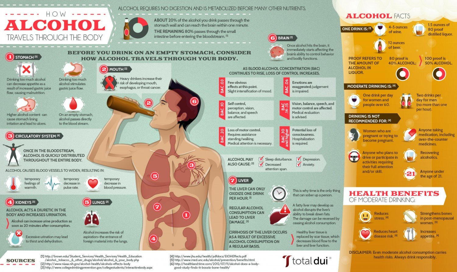 how-alcohol-travels-through-the-body_50ca3deb65aab_w1500.jpeg